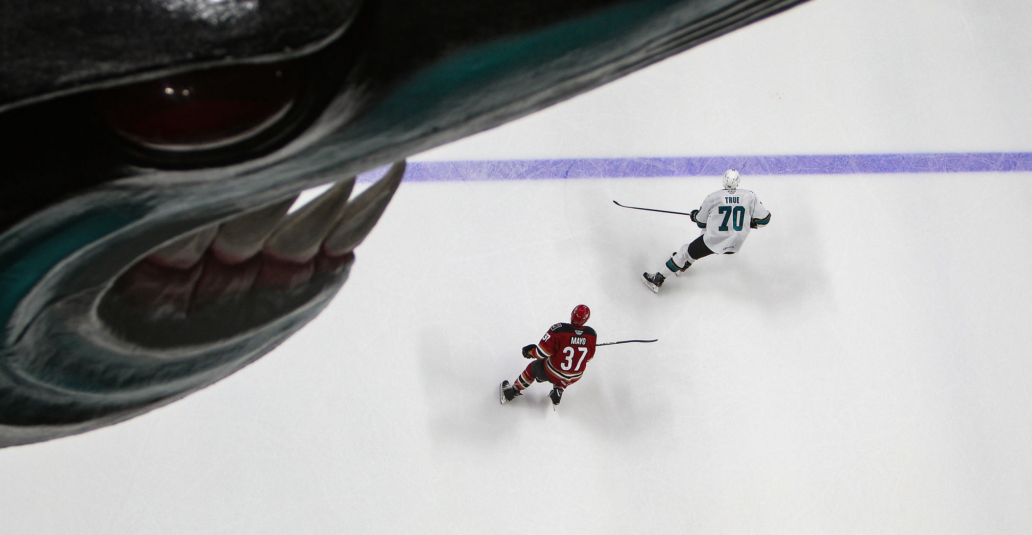 The Official Website of the Tucson Roadrunners: Hockey News